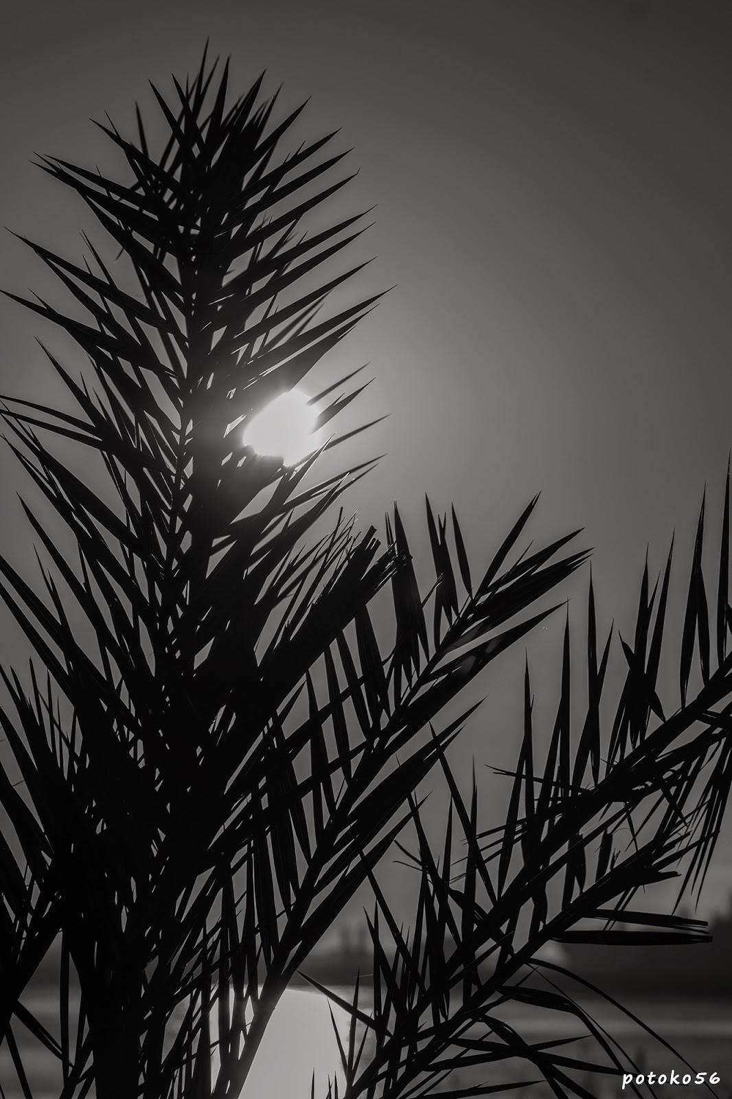 entre ramas el astro sol Rota