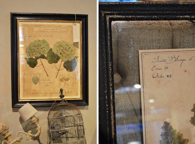 quadri botanica