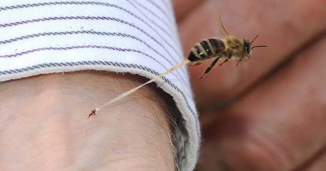 El mundo entero celebra la cura contra el SIDA: Veneno de abeja