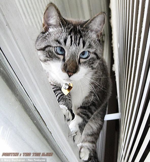 Kucing Comel Mata Juling Jadi Hits Di Internet Peristiwa