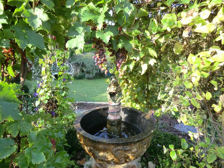 fontaine et raisins