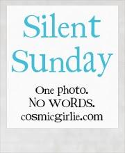 http://www.cosmicgirlie.com/silent-sunday/