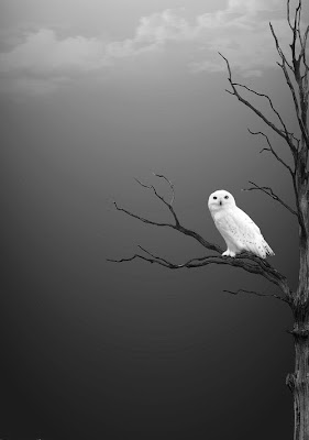 white owl on a bare branch against a grey sky