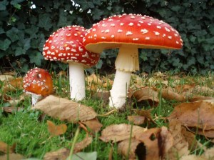 What is the difference between a toadstool and a mushroom? & Absolutely Fungulous: What is the difference between a toadstool ... islam-shia.org