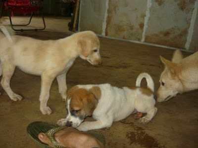 pups at the animal shelter in karjat