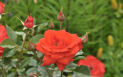 Fotos de ramos de flores con docenas de rosas de colores