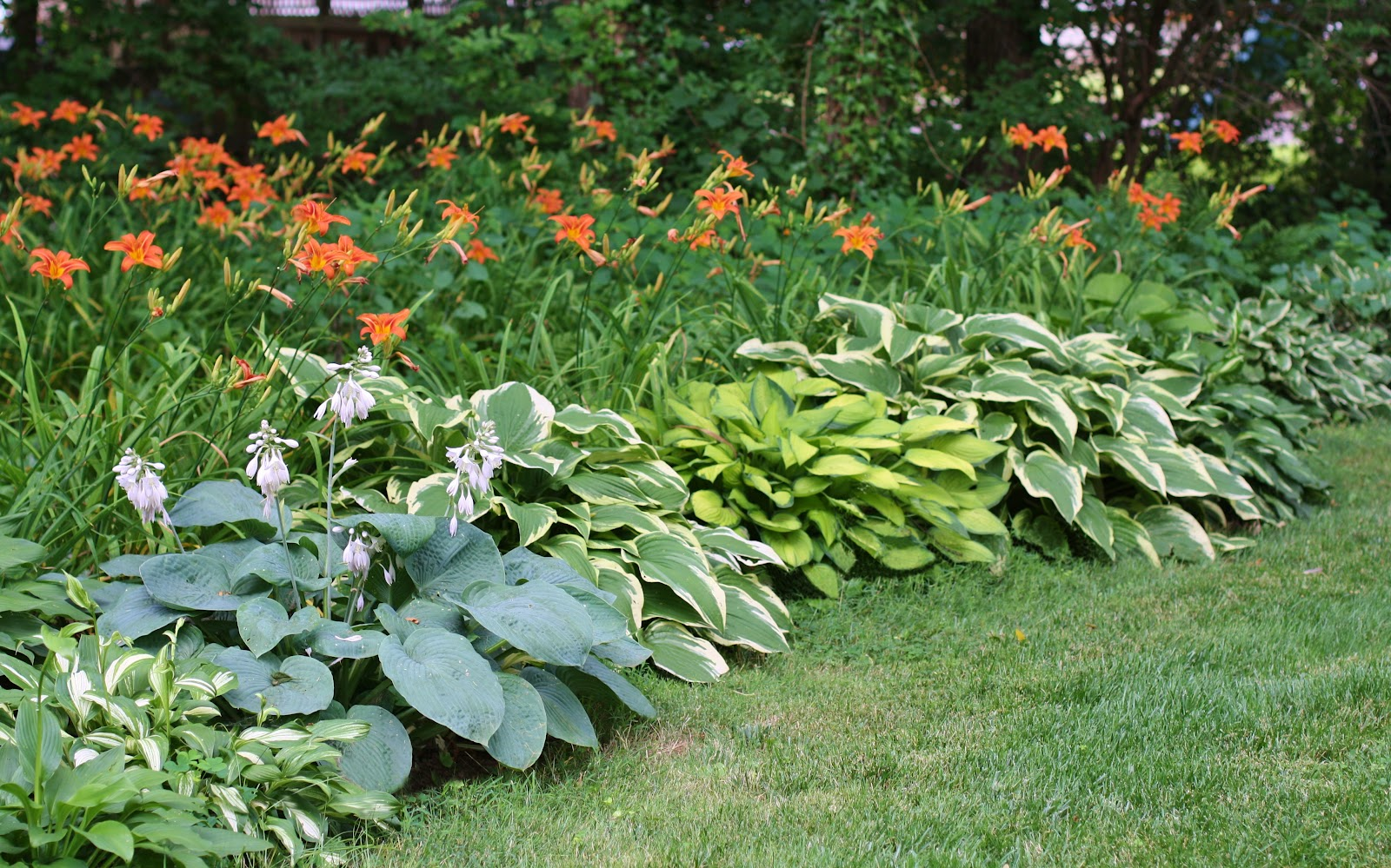 High Street Market Lilies Hostas