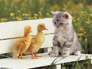 Funny Cat funny cat