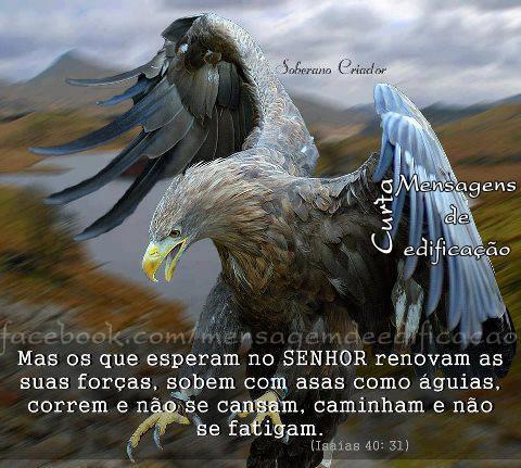 O Senhor quer te dar asas de águia.
