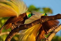 Bird-of-paradise Picture and Photo 20