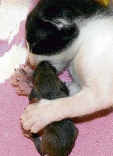 Lahir Beranak Bersalin Buntin Mengandung Hamil Aneh Ajaib Haiwan Luar Biasa