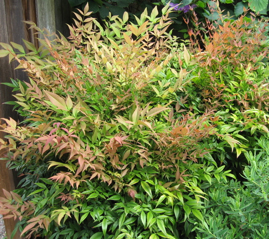 Seattle Garden Ideas: Designing Gardens With Foliage Color