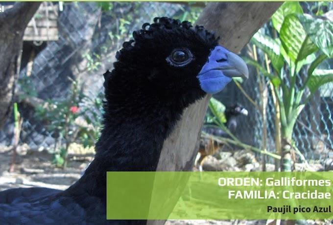 9 especies de aves se encuentran en peligro de extinción en la jurisdicción de la CAS