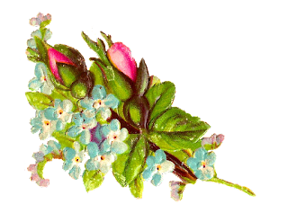 stock rose image