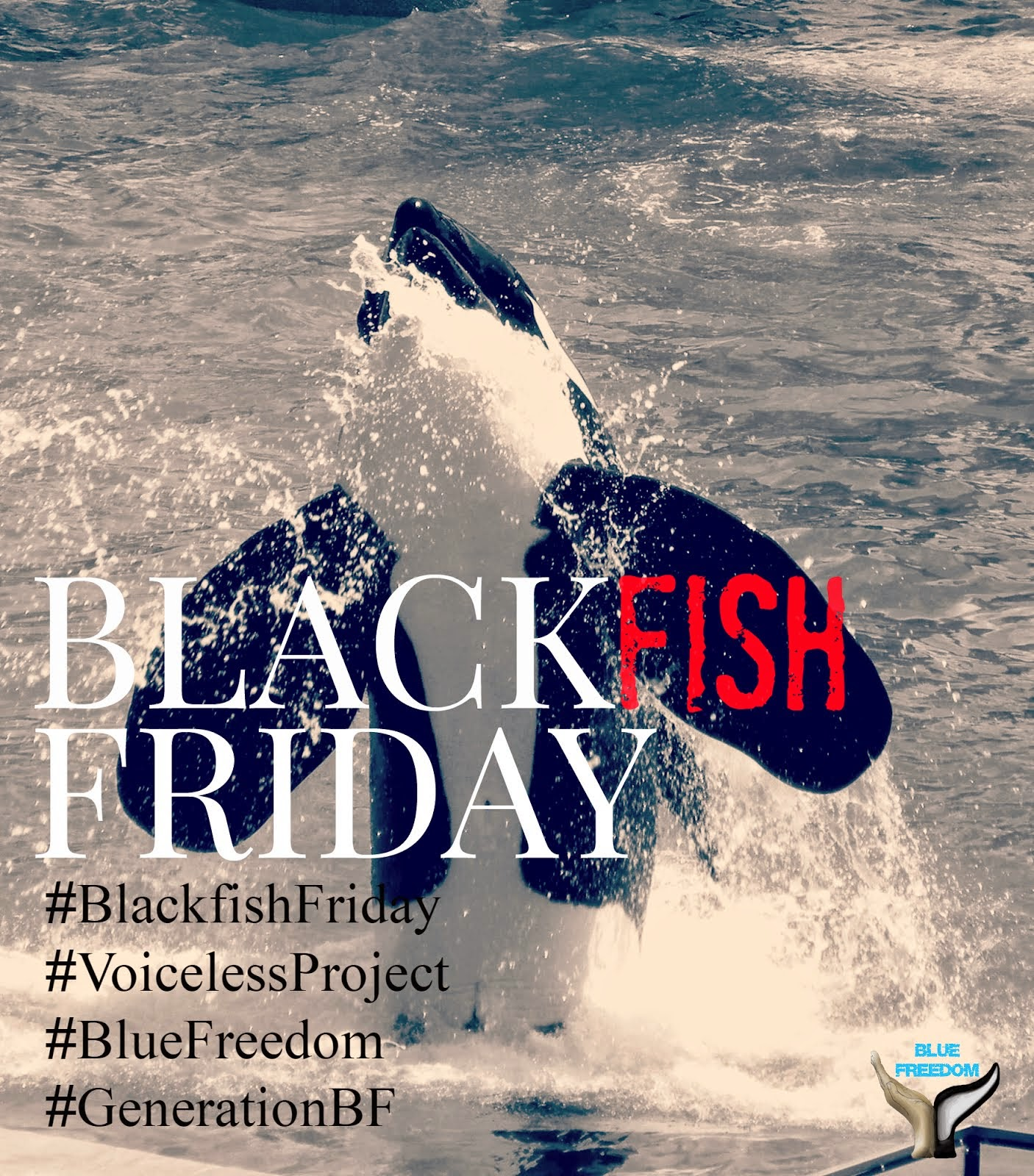 #BLACKFISHFRIDAY