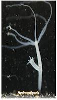 Gambar Hewan Avertebrata, Invertebrata