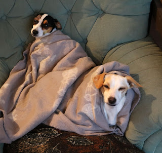Puppies staying warm