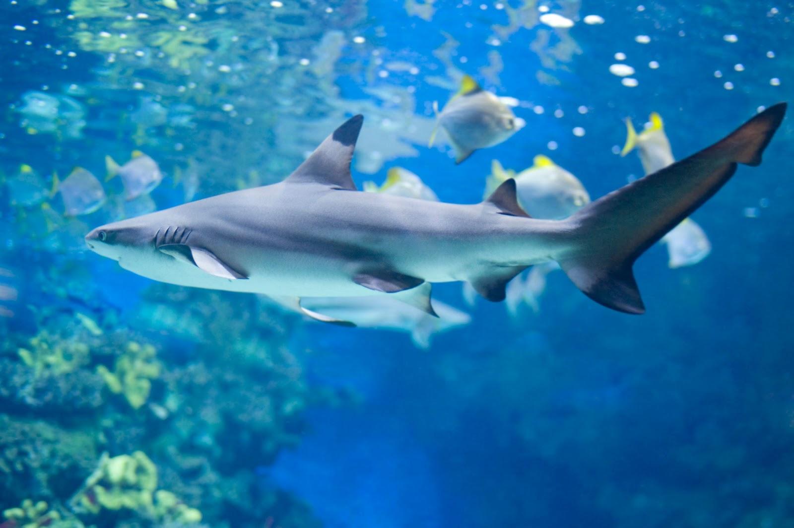 David brett williams shark bait for Small sharks for fish tanks