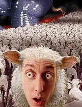 [Imagem: ovelhas.jpg]