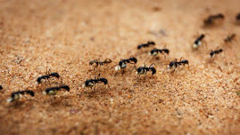 TRIVIA ABOUT ANTS