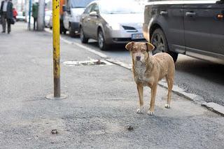 Bucharest stray dog