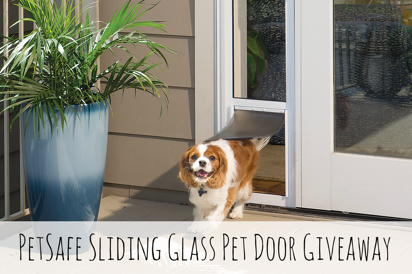 Nice One of our lucky readers will have the chance to win their very own PetSafe Sliding Glass Pet Door The winner can choose which size door they will need for