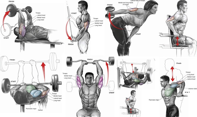Bicep Workouts  YouTube
