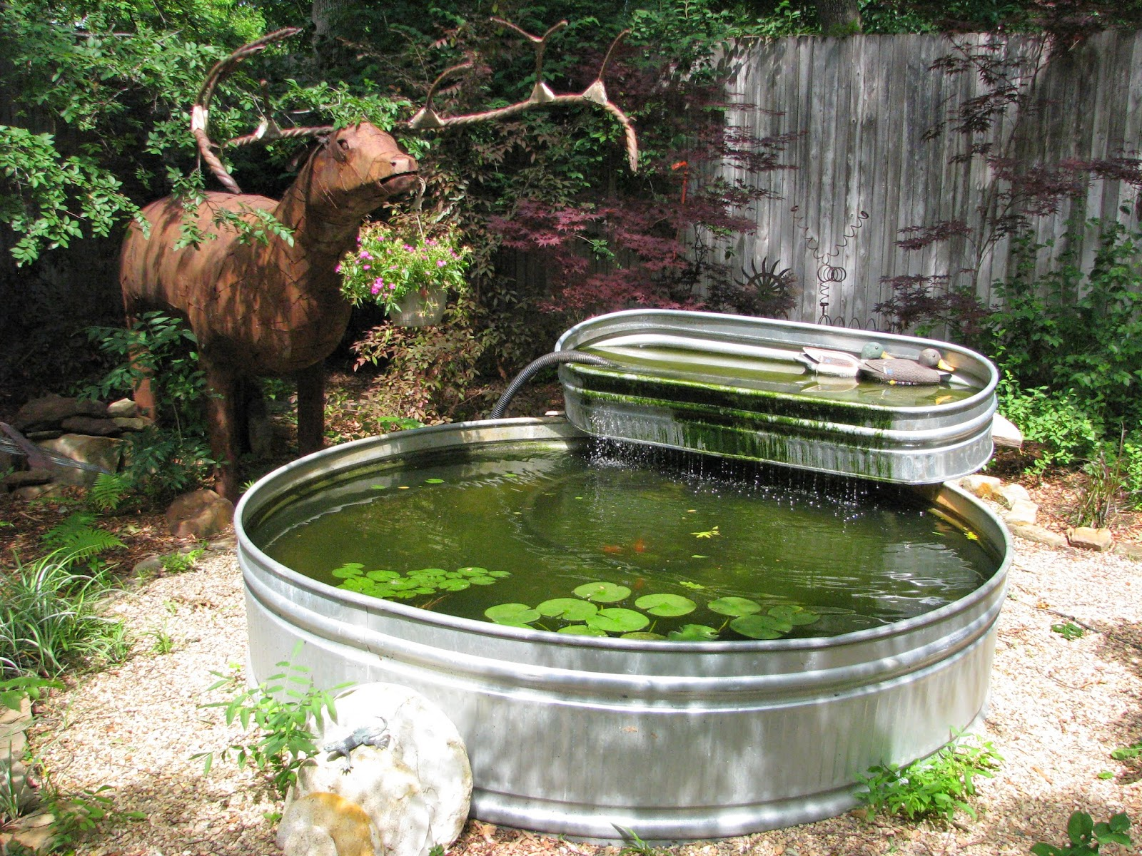 As I Was Getting Ready To Leave The Garden, I Passed By This Stock Tank  Combo With A Large Metal Elk Standing Nearby And Two Decoy Ducks In The  Upper Tank.