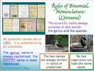 binomial nomenclature rules