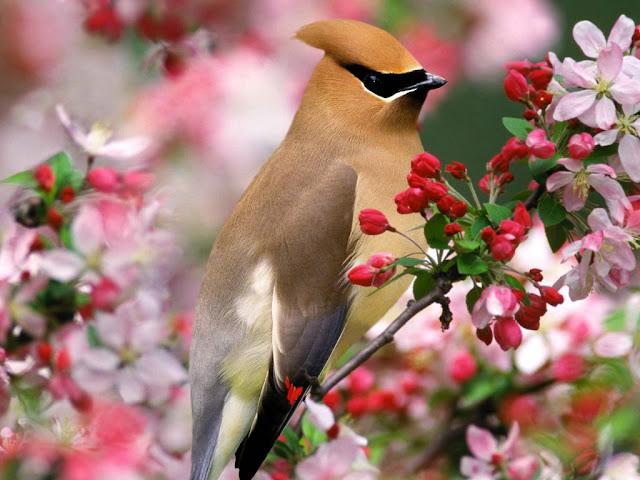 Primavera - A Estação das Flores