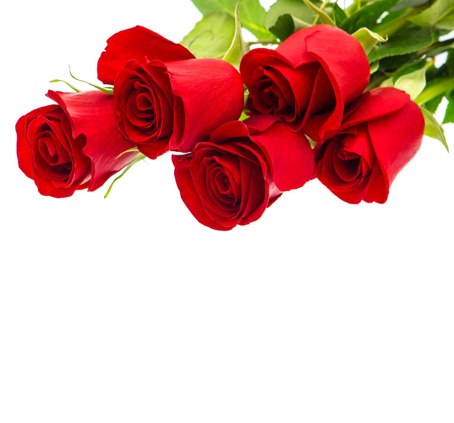 Imágene Experience: 20 fotos gratis de rosas, tulipanes y
