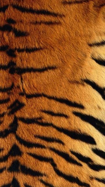 360x640 wallpapers tiger skin