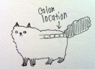 Megacolon-cat-01