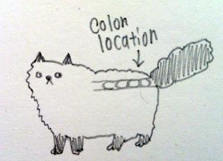Megacolon-cat-01
