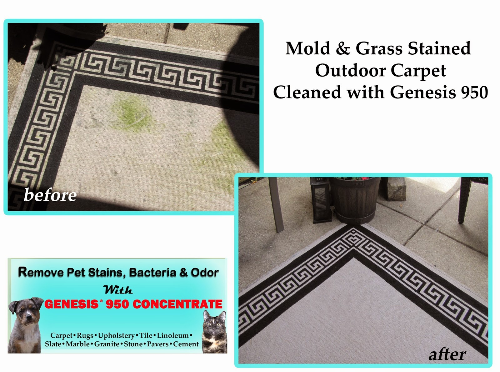 Remove mold, grass stains and grease from rugs
