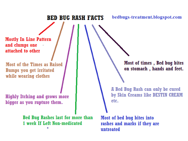 infographics picture on bed bug rash facts
