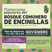 Plantaciones populares de Bosque Comunero de Encinillas