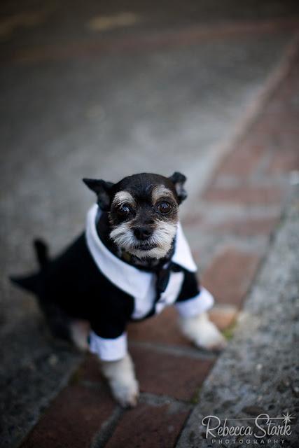 perrito elegante con terno para la boda