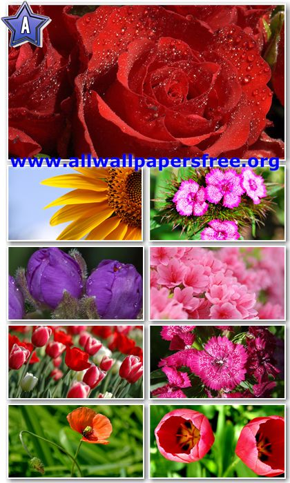 30 Beautiful Flowers HD Wallpapers 1366 X 768 [Set 4]