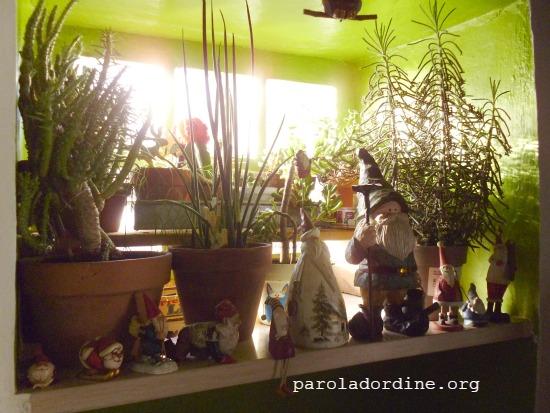 lastanzaverdedicri piante grasse 2