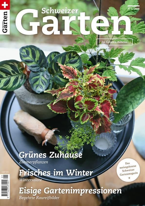 Meine Zimmerpflanzensammlung im Schweizer Garten Magazin