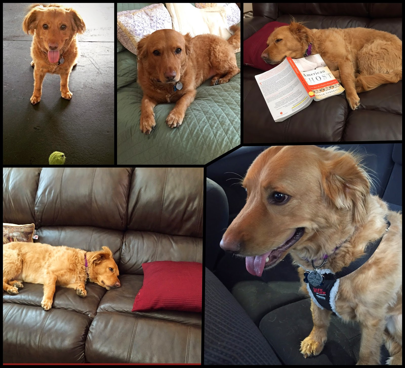 Weekly Winchester dog photo collage on The 3 Rs Blog