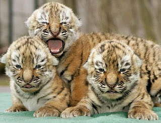 Wild Baby Animals, part 1