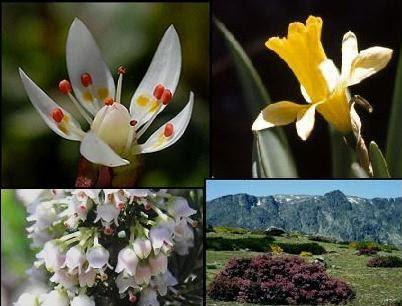 Bolivia flora y fauna - Mas l estepa agullana ...