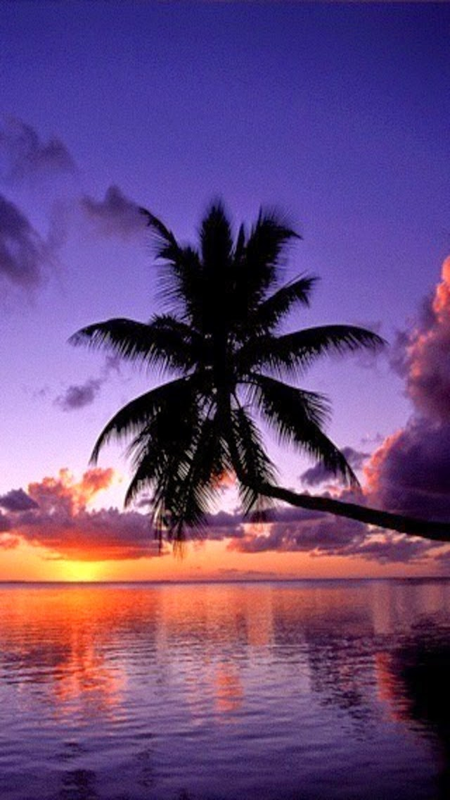 Palm Tree Sunset Ocean Beach Iphone Wallpapers