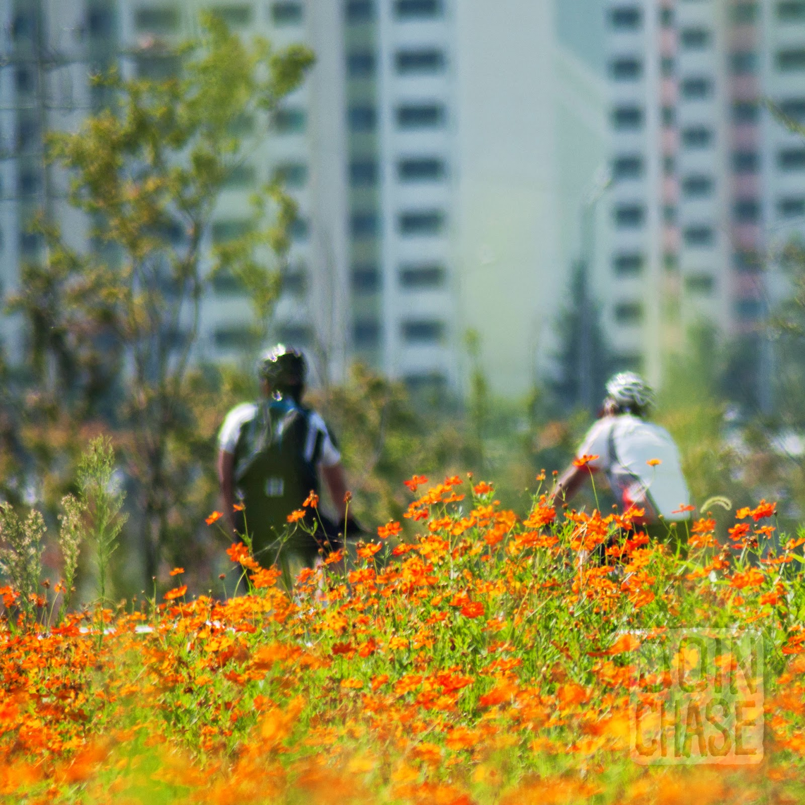 Bicyclists passing through wildflowers along the Yeongsang River Bike Path near Gwangju, South Korea.