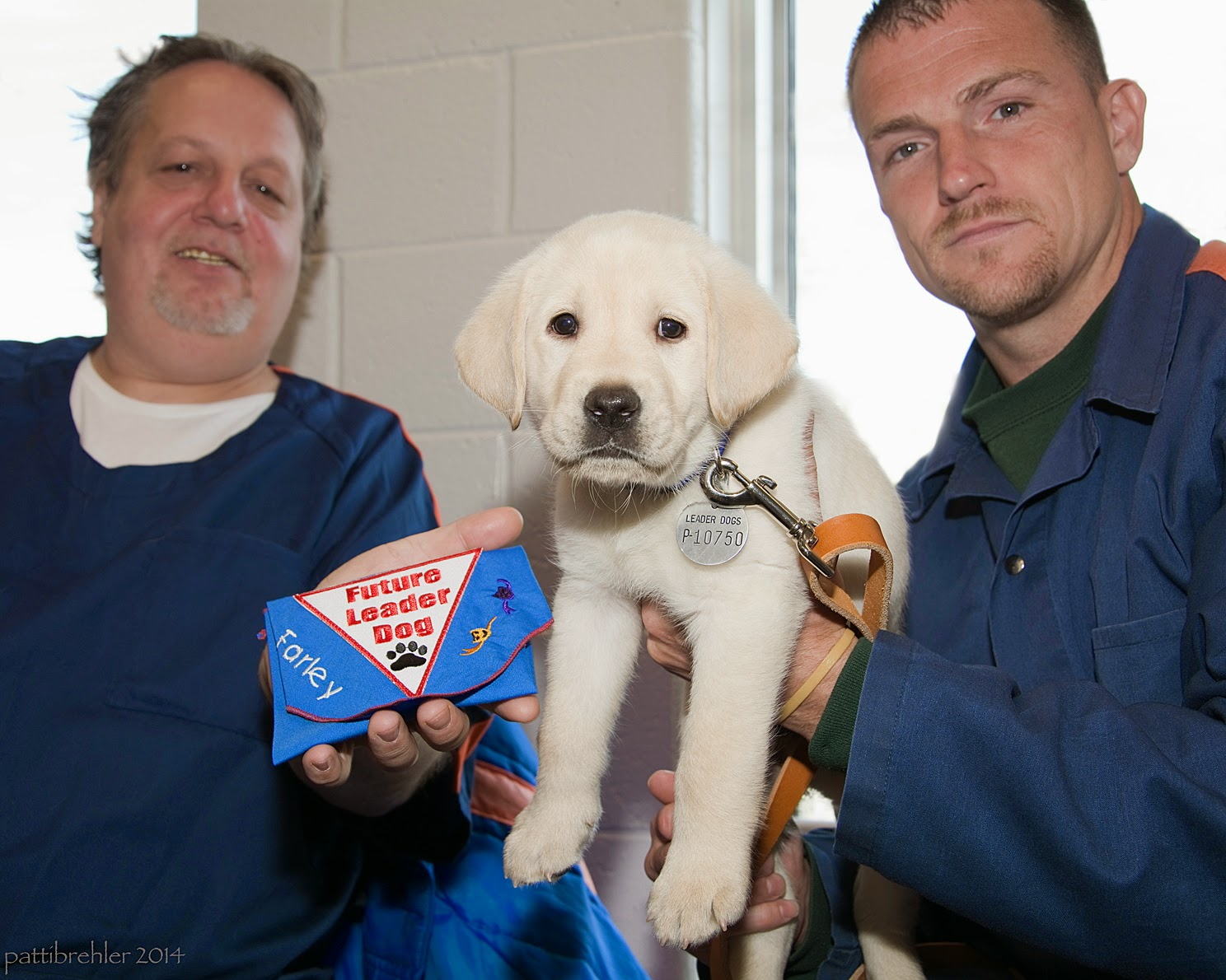 """Two men dressed in the blue prison uniforms stand on either side of a small yellow lab puppy. The man on the right is holding the puppy up under his chest. The puppy is looking at the camera (and the men are too) and has a leash attached to his collar. The man on the left is holding the blue Future Leader Dog bandana that has been embroidered with his name, """"Farley."""""""