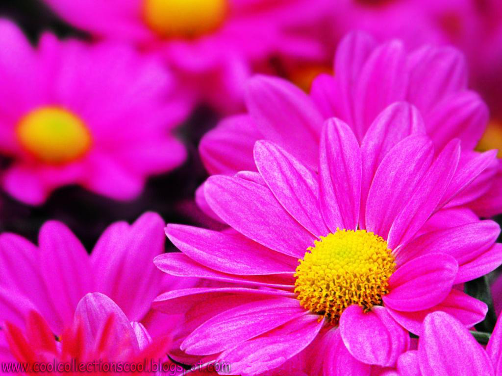 Wallpapers name beautiful flowers hq wallpapers - Flower t wallpaper ...