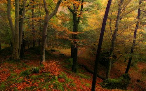 Autumn in Grasmere by Wolfy - Otoño en el bosque