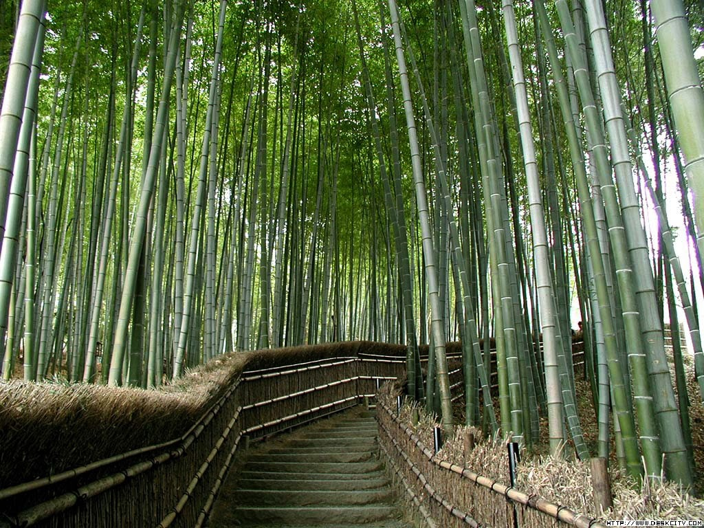 bamboo, beautiful, forest, japan, natural,